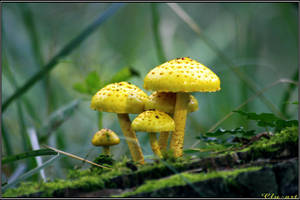 Mushrooms are Forest Gold by Clu-art