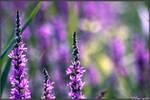 Summer Impressions 43 by Clu-art