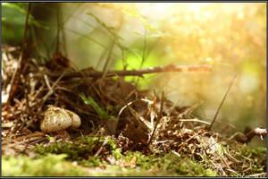Summer Find: Shaggy Scalycap by Clu-art