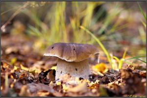 Autumn Picks: The Find by Clu-art