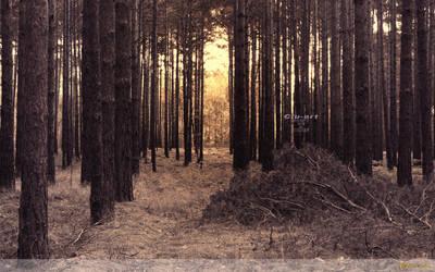 Golden Forest Wallpaper by Clu-art