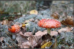 Autumn Picks: Flies by Clu-art