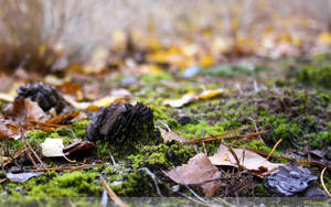 Forest Floor Wallpaper by Clu-art