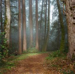 A Breath of Fog by jbakerphotography