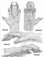 Equus Hand Concept by RussellTuller