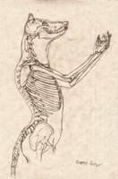 Wolf Anthro Anatomy {Upper Bone Structure} by RussellTuller