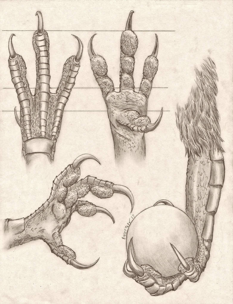 Anthro Avian Hand Anatomy Study By Russelltuller On Deviantart