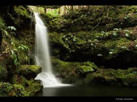 Forest Hymn II by filipelourenco