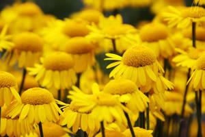 flora by UniHydra