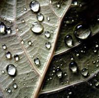 Drops 2 by syysmyrkkylilja