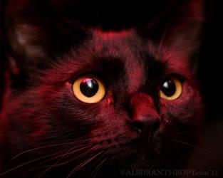 Rosso Strega by Aleuranthropy