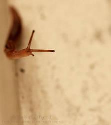 Curious Slug by Aleuranthropy