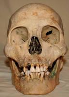 Skull Stock Photo 01 by Aleuranthropy