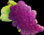 Looks Grape by onlyhalfpigeon
