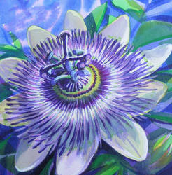 Passionflower by Krystalvoyager