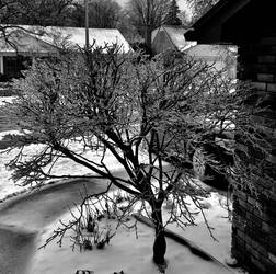 Ice Tree by wildstar27