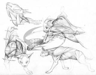 Cat Anatomy Reference 1 by opticalxarsenal