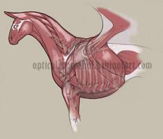 Kite Anatomy by opticalxarsenal