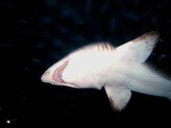 shark mode by deadposh