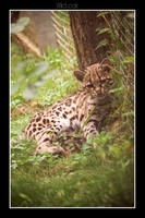 Wild cat by Unicorne