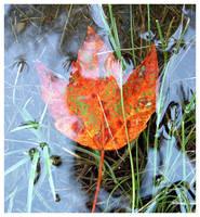 Waiting for Autumn by melissasigalovskaya
