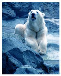 Cute Polar Bear 2 by melissasigalovskaya