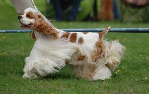 Dog Show in Lodz 2012 by Kalypso123