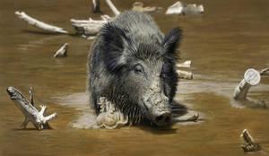 Wild Boar Photo Study by MarkBulahao