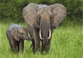Elephant Study by MarkBulahao