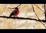 Bird in red by Anavuaina