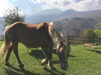 Horse by anirico