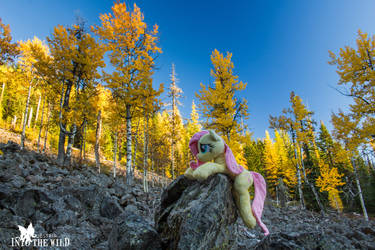 Fluttershy Among the Cottonwoods by FluttershyHiker