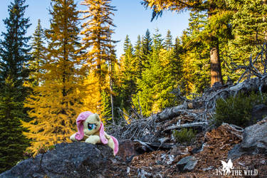 Fluttershy Among the Larches (1) by FluttershyHiker