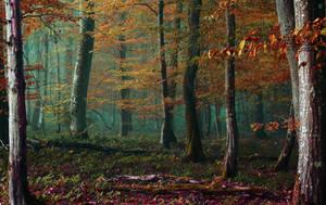 Into the wild by DavidMnr