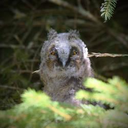 Angry bird by DavidMnr
