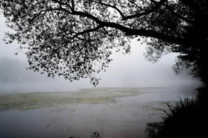 A deep silence by DavidMnr