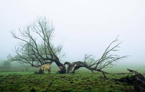 Misty morning by DavidMnr