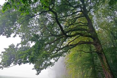 L'arbre/The tree by DavidMnr