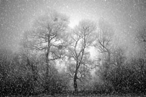 Frozen Silhouettes by DavidMnr