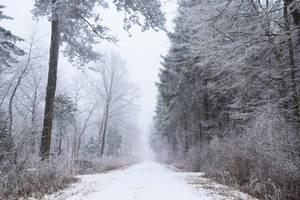 Derniere neiges /  The last snow by DavidMnr