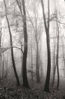 Ethereal by DavidMnr