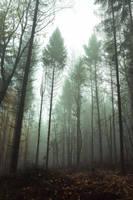 Seul dans les bois (2) by DavidMnr