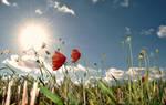 Sunny day by DavidMnr