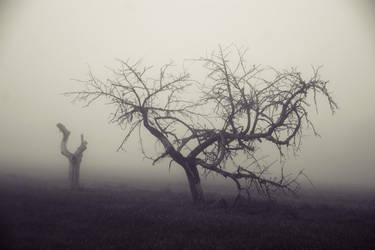 Nature morte by DavidMnr