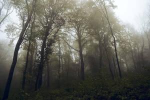 quelque-part dans les bois by DavidMnr