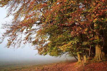 Histoires d'automne by DavidMnr