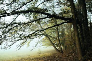 Les arbres by DavidMnr