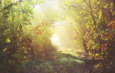 Path of light/chemin de lumiere by DavidMnr