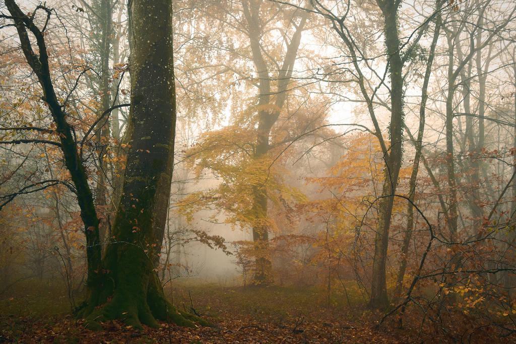 Automne/Autumn by DavidMnr
