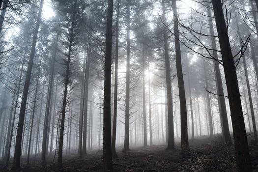 le territoire des ombres by DavidMnr